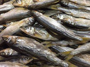 滋賀県琵琶湖産 天然小鮎の丸干し