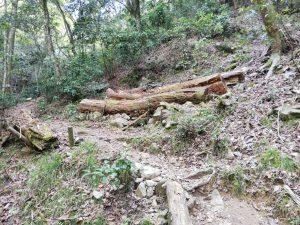 櫻の園への山道